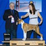 First show, First Winners Dog